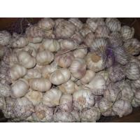 Buy cheap 2015 new fresh normal white garlic in high quality from wholesalers