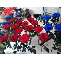 Cheap 10cm Preserved Flower Rose with Stem Long 30cm Real natural fresh roses for sale