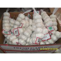 Buy cheap 2015 new crop fresh nature garlic with 20 year experience from China from wholesalers