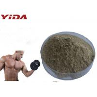Cheap Natural Oyster Extract Sex Steroid Hormones Raw Powder Pharmaceutical / Food Grade for sale