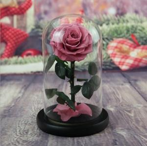 Cheap Hot sale Natural Fresh flower rose in big long glass dome Home Decoration and Christmas gift for sale