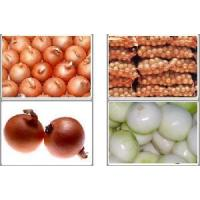 Cheap Fresh Yellow Onion for sale
