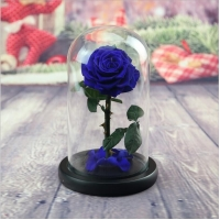 Cheap Preserved Fresh Flower Live Enchanted Rose in Glass Dome Cover with Gift Box Forever Real Rose Everlasting Flower for sale