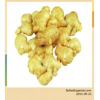 Cheap Fresh Ginger factory in China for sale