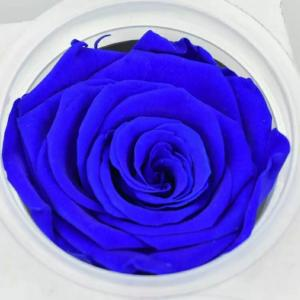 Cheap Preserved Roses Flower 12 Roses in Round Gift Box for Wife or Girlfriend rose Preserved Flowers for sale