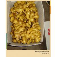 Cheap Chinese Fresh Ginger With Top Quality & Competitive Price for sale