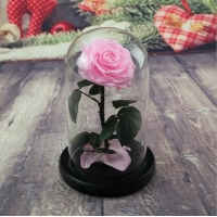 Cheap OEM Perfect Valentines Day Gifts Multiple Colours Preserved Everlasting Real Rose Flower in Glass Dome for sale