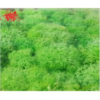 Cheap Soft Touch Preserved Moss Real Fresh Moss For Wall Decoration for sale