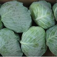 Cheap Fresh Cabbage for sale