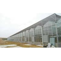 Cheap Agricultural/Commercial/Industrial Plastic Multi-Span Film Greenhouse with Hydroponic System for sale
