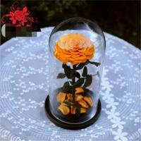 Cheap Natural Fresh flower rose Preserved rose in glass terrariums with base for luxury gifts for sale