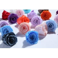 Cheap Factory wholesale real touch high quality multi color natural preserved roses at cheap price Christmas gift for sale