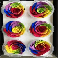 Cheap rainbow rose  Eternal real preserved rainbow roses 5-6cm Fresh Stabilized rainbow rose gift for sale