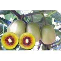 How long kiwi fruit mature