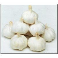Cheap Pure White Garlic for sale