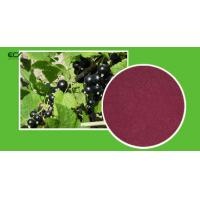 Cheap Ribes Nigrum L Organic Food Ingredients Blackberry Fruit Powder With Flavonoids for sale