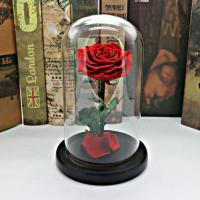 Cheap Hot Sell  Lasting Preserved Yellow Rose Flowers in Glass Dome for Christams Gifts for sale