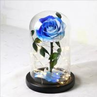 Cheap Beauty and the beast preserved rose in glass real rose preserved for sale