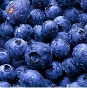 Cheap Frozen Blueberry for sale