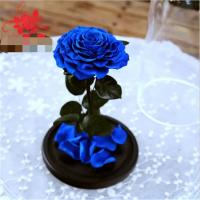 Cheap Preserved rose in glass terrariums with base for luxury gifts for sale
