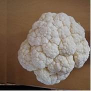 Cheap Fresh Cauliflower for sale