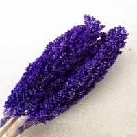 Cheap Factory Price Dry Flower Preserved Broomcorn Dry Sorghum For Decoration for sale
