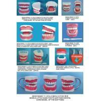 Medical Disposable Teeth Model Manufactures
