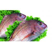 True sea bream