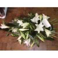 Cheap Longi Lily for sale