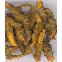 Cheap More.. Berberine for sale