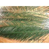 preserved phoenix canariensis leaves Manufactures