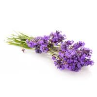 Cheap Natural Essential Oil for sale