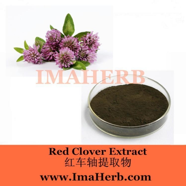Quality Red Clover Extract wholesale