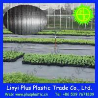Cheap Grass Cloth Agricultural Ground Cover for sale