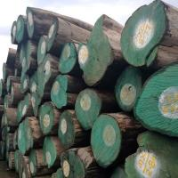 Buy cheap China Suppliers Wholesale Round Wood Cheap Price Top Quality Teak For Sale from wholesalers