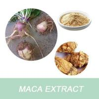 Cheap Best selling Maca Extract Powder/Maca root extract for sale