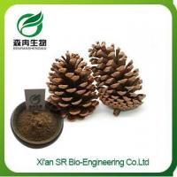 Pine Nuts Extract, Factory Supply Hot Sale Pure Natural Pine Nut Powder