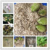 Cheap Kiri seeds with phyto certificate for sale