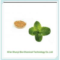 Mint Extract |pure Mint Extract 4:1-20:1 Powder