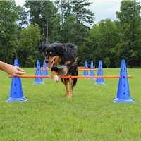 Buy cheap Dog Agility Jumps from wholesalers